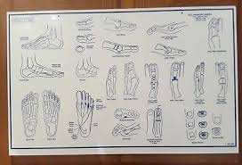Foot Anatomy Medical Conditions Dry Erase Podiatry Doctor