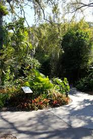 mustdo com must do visitor guides garden pathway at marie selby botanical gardens