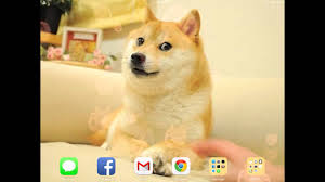 doge wallpaper ipad.  Ipad Doge Dynamic Wallpaper IOS 7 IPad 2 GSM Throughout Ipad