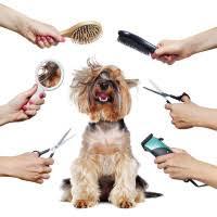Товары для груминга для собак - Интернет-Зоомагазин PetXP | г ...