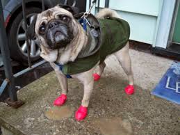 dogboots