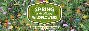 how to plant wildflowers banner