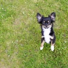 Koera tervis ja hooldamine