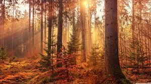 Autumn Forest Path Ultra HD Desktop ...