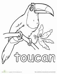 Small Picture Toucan Worksheet Educationcom