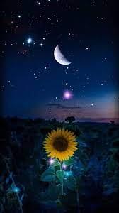 Sunflower under the moon #wallpaper ...