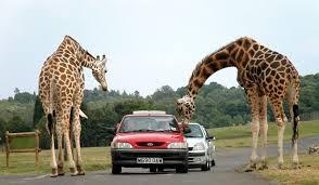 Image result for safari park animals
