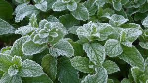 「霜」の画像検索結果