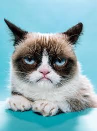 grumpy cat i had a birthday once. Simple Cat Grumpy Cat U2026 With I Had A Birthday Once