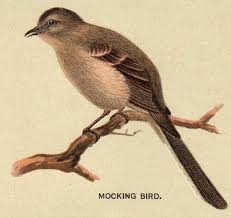 Image result for drawings of mockingbird public domain