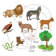 animal food chain.  Food All Living Things Need Food To Survive A Food Chain Is The System Of How  Each Thing Gets Its Food And Animal