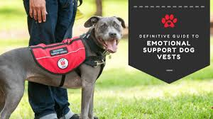 Emotional support animal real Letter An Emotional Support Dog Wearing Esa Vest Certapet 50 Of Dog Owners Dont Know This About Emotional Support Dog Vests