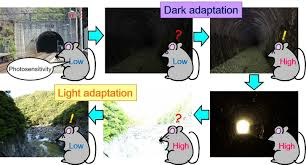 Atomic Light Switch Researchers Discover Molecular Light Switch In Photoreceptor