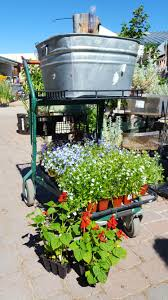 Plant a tub by Wendy Hanson Mazet – Northern Nevada Horticulture