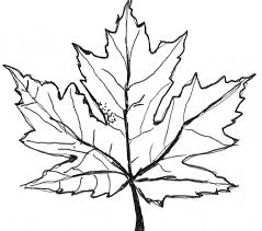 Small Picture Download Coloring Pages Maple Leaf Coloring Page Fresh On Style