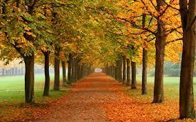 Fall Nature Wallpaper Autumn Leaves 3d ...