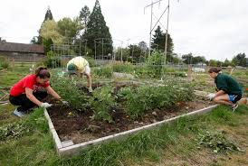 community gardening. THPRD Provides Gardening Opportunities At 13 Sites Within The District. For More Information, Call Community