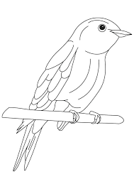 Eastern Bluebird Coloring Page Blue Bird Coloring Pages Bluebird