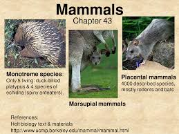 Image result for mammal types