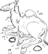 Small Picture Camels coloring pages Free Coloring Pages