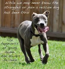 Rescue Dog Quotes Amazing Happy Rescue Dog Quotes