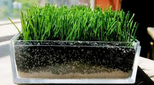 artificial turf field. Profits Vs. Safety: What New Findings About FieldTurf Tell Us The Future Of Sports Artificial Turf Field M