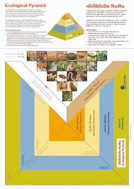Ecosystem Pyramid Chart Make A Ecological Pyramid Set Of 50 Charts