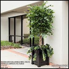 6 japanese maple tree outdoor rated
