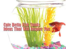 betta fish decor homemade betta fish tank decorations