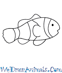 clown fish drawing. Perfect Drawing On Clown Fish Drawing We Draw Animals