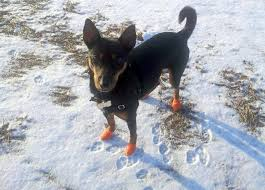 dog boots disposable reusable waterproof pawz