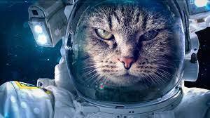 Wallpaper Space suit, cat astronaut ...