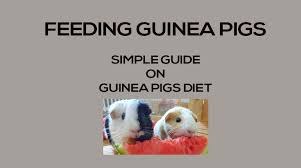 guinea pig cages bedding accs