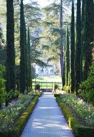 Small Picture Best 25 Italian cypress trees ideas on Pinterest Privacy