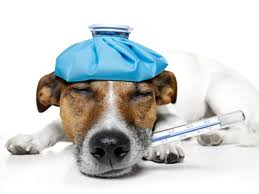 Dog Friendly Over The Counter Medications Chart Can I Give My Dog Over The Counter Pain Medicine