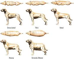 Purinas Body Condition Chart Shows Dogs In A Range Of