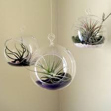 3PCS/set Hanging Glass Air Plant Planters,Opening 2 Side Holes in Orb  Terrarium