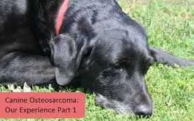Canine Osteosarcoma Canine Osteosarcoma Our Experience Part I Slimdoggy