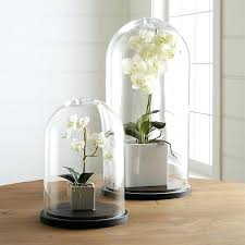 large glass cloche bell jar small plant dome display decorative clear jars