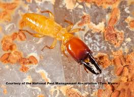Image result for Termites also love moisture