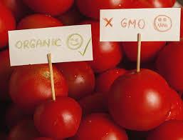 anthropology essay ghostwriters site thesis developmental organic food vs genetically modified food essay investopedia