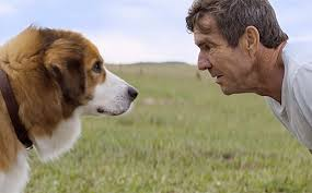 a dog s purpose bailey. Simple Bailey Josh Gad Voices A Reincarnated Dog In A Dogu0027s Purpose Trailer Intended Dog S Bailey