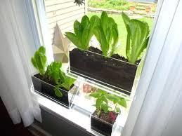 indoor window garden. indoor window planter vegetables to grow indoors box herb garden g