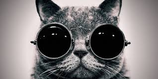 cats twitter background. Contemporary Cats Intended Cats Twitter Background