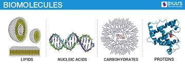 biomolecules carbohydrates proteins