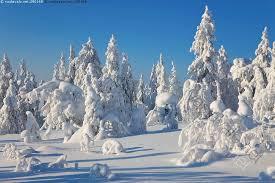 Kuva: Talvimaisema - talvi hanki puu puut lumi luminen talvimaisema lumiset  taivas - Kuvapankki - Kuvatoimisto Vastavalo.net