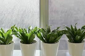 office pot plants. Potted Office Plants Pot R