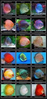 Cool Aquariums 29 Best Images About Fish Aquariums On Pinterest Bonsai Trees
