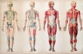 Human Body Parts Chart In English Human Body Description Anatomy Facts Britannica