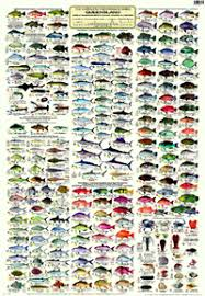 Australian Reef Fish Species Chart The Complete Fishermans Guide Queensland Great Barrier